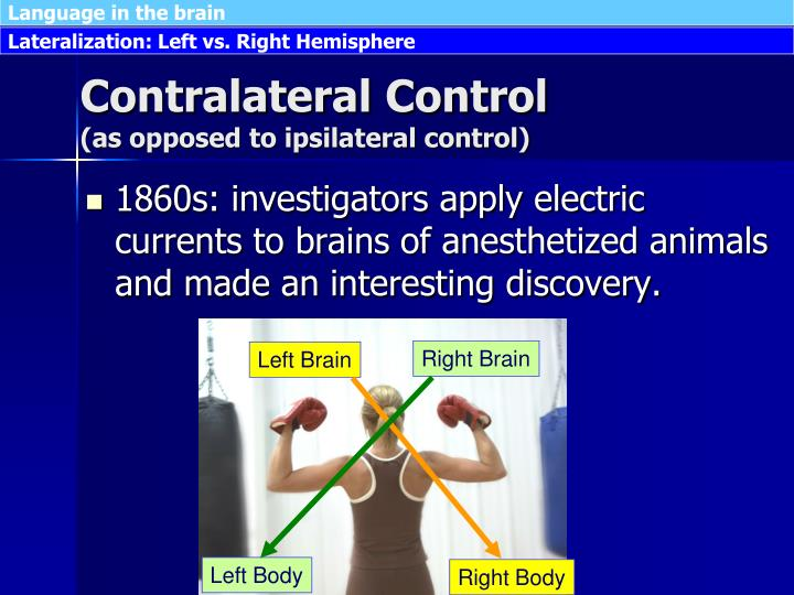 Contralateral control as opposed to ipsilateral control