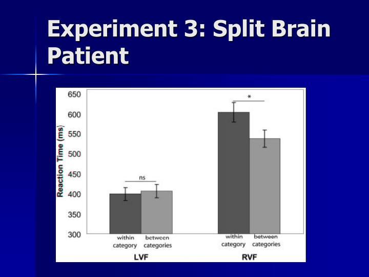 Experiment 3: Split Brain Patient