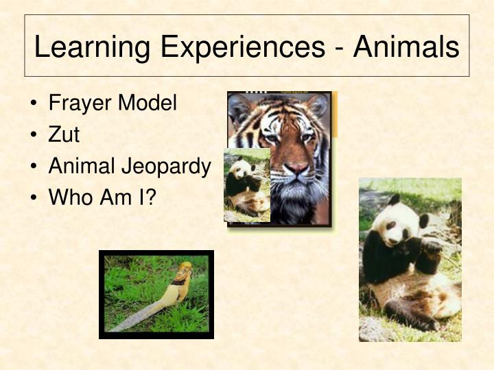 Learning Experiences - Animals