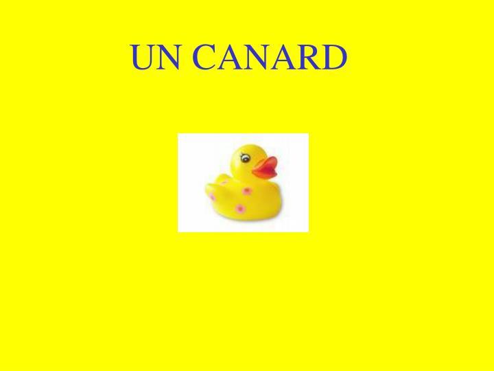 UN CANARD