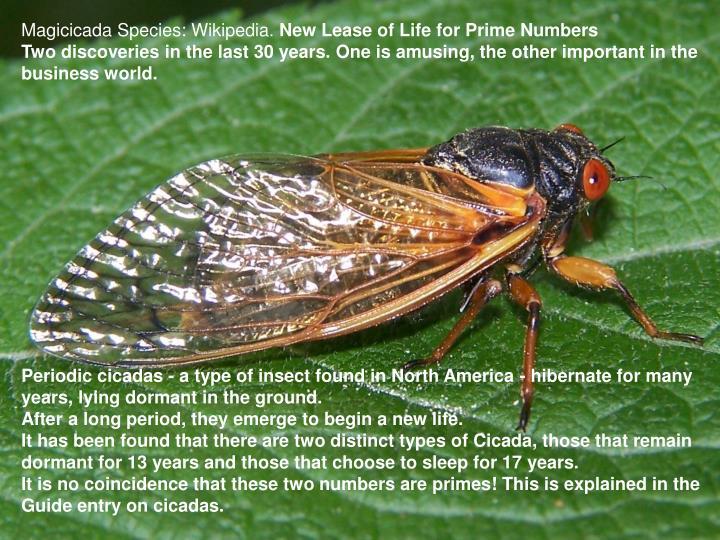 Magicicada Species: Wikipedia.