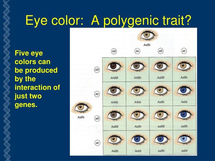 Eye color:  A polygenic trait?