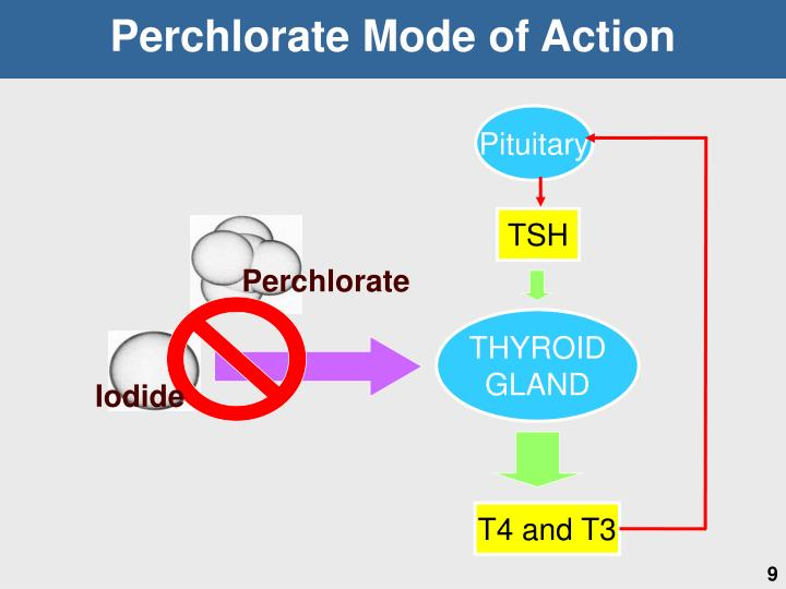 Perchlorate Mode of Action