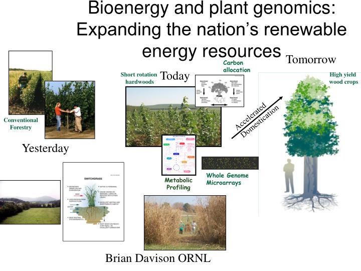 Bioenergy and plant genomics: