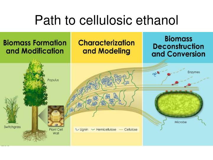 Path to cellulosic ethanol