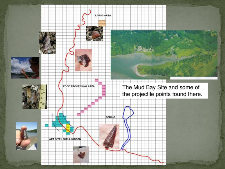 The Mud Bay Site and some of the projectile points found there.