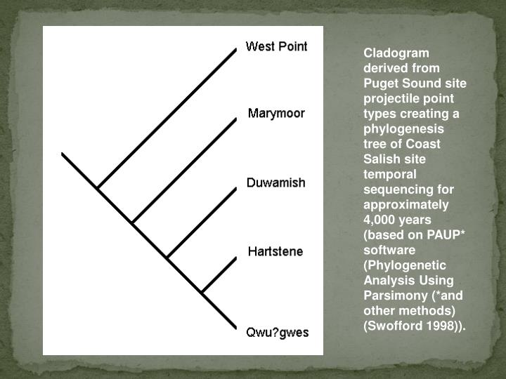 Cladogram derived from Puget Sound site projectile point types creating a phylogenesis tree of Coast Salish site temporal sequencing for approximately 4,000 years (based on PAUP* software (Phylogenetic Analysis Using Parsimony (*and other methods) (Swofford 1998)).