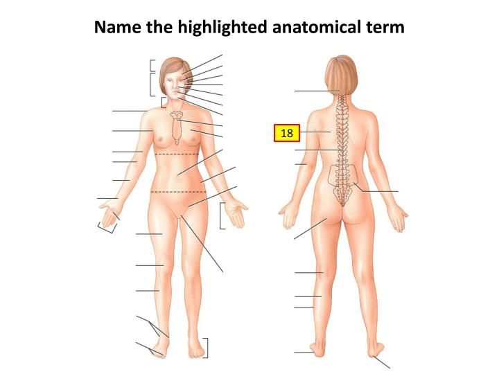 Name the highlighted anatomical term