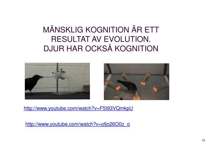MÄNSKLIG KOGNITION ÄR ETT RESULTAT AV EVOLUTION.
