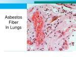 asbestos fiber in lungs