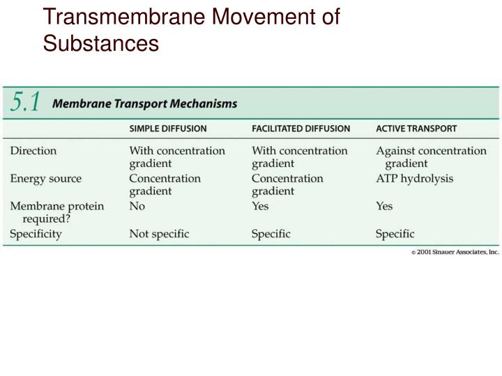 Transmembrane Movement of Substances