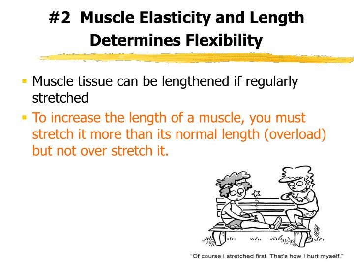 #2  Muscle Elasticity and Length