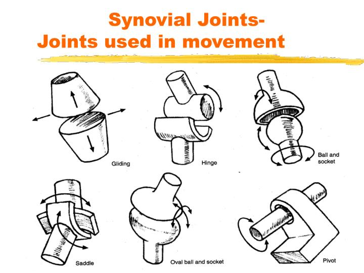 Synovial Joints-