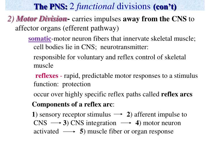 The PNS: