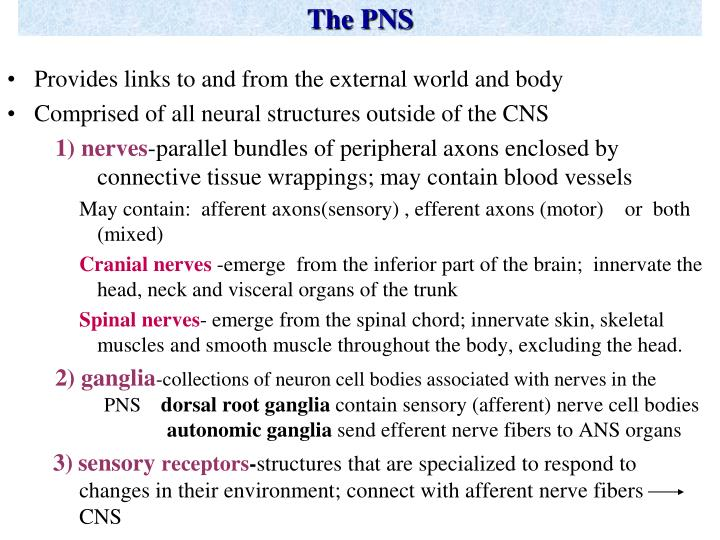 The pns