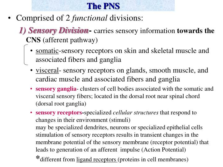 The pns2