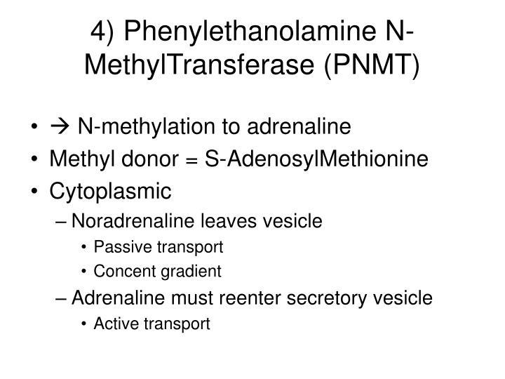 4) Phenylethanolamine N-MethylTransferase (PNMT)
