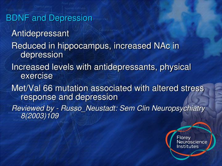 BDNF and Depression