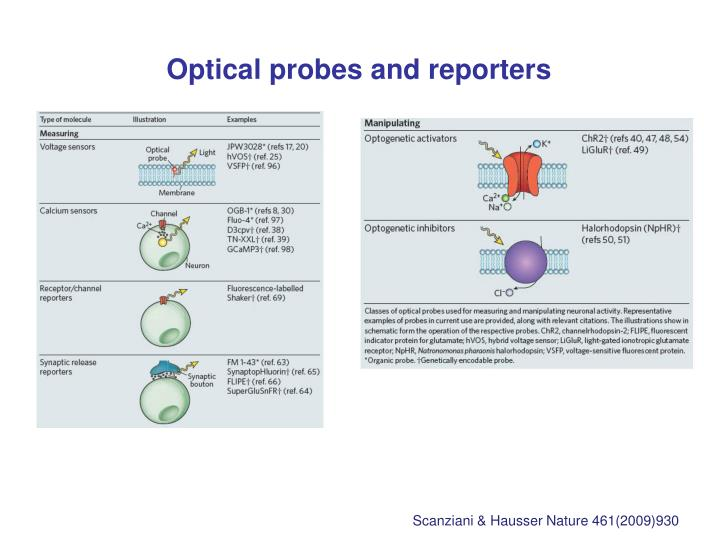 Optical probes and reporters