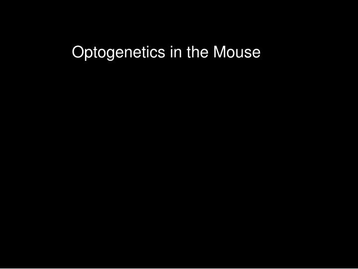 Optogenetics in the Mouse