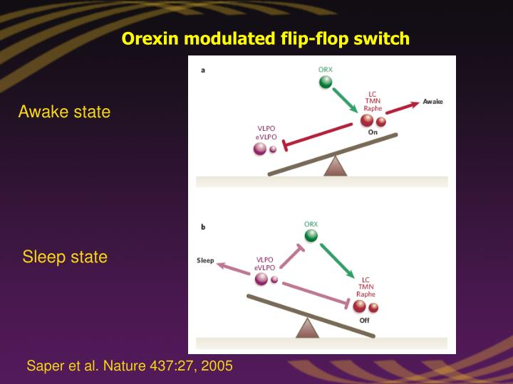 Orexin modulated flip-flop switch