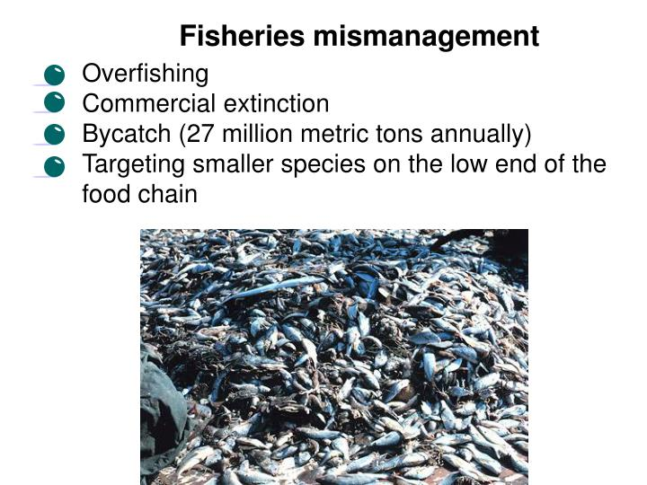 Fisheries mismanagement