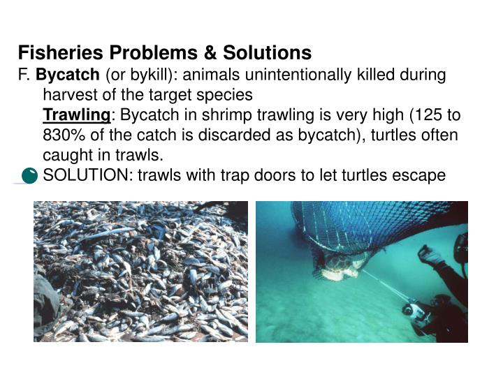 Fisheries Problems & Solutions