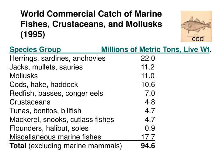 World Commercial Catch of Marine Fishes, Crustaceans, and Mollusks (1995)