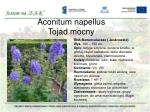 aconitum napellus tojad mocny