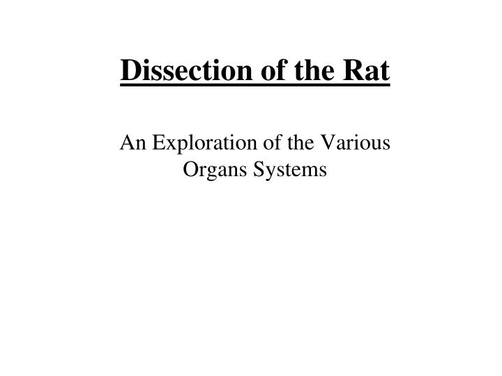 dissection of the rat n.