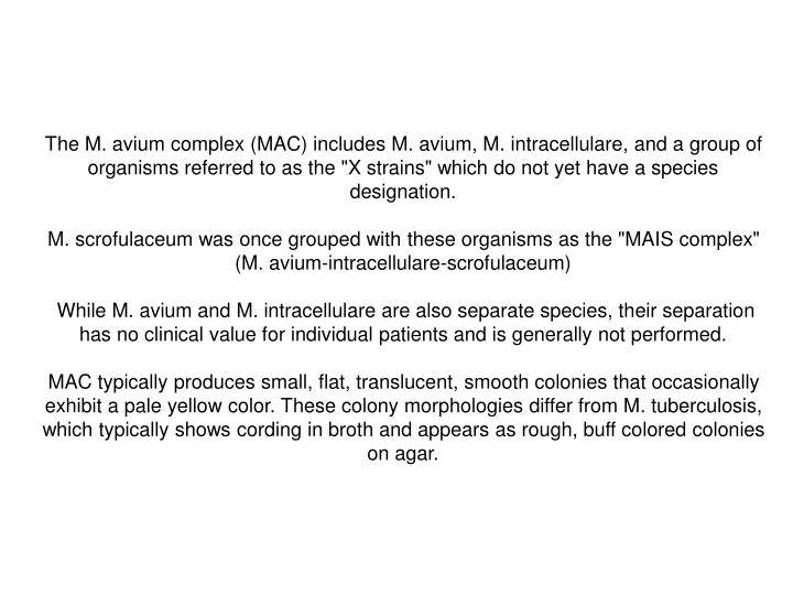 """The M. avium complex (MAC) includes M. avium, M. intracellulare, and a group of organisms referred to as the """"X strains"""" which do not yet have a species designation."""