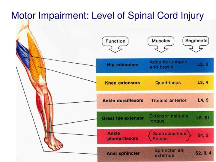Motor Impairment: Level of Spinal Cord Injury