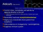 aldicarb cas116 06 3