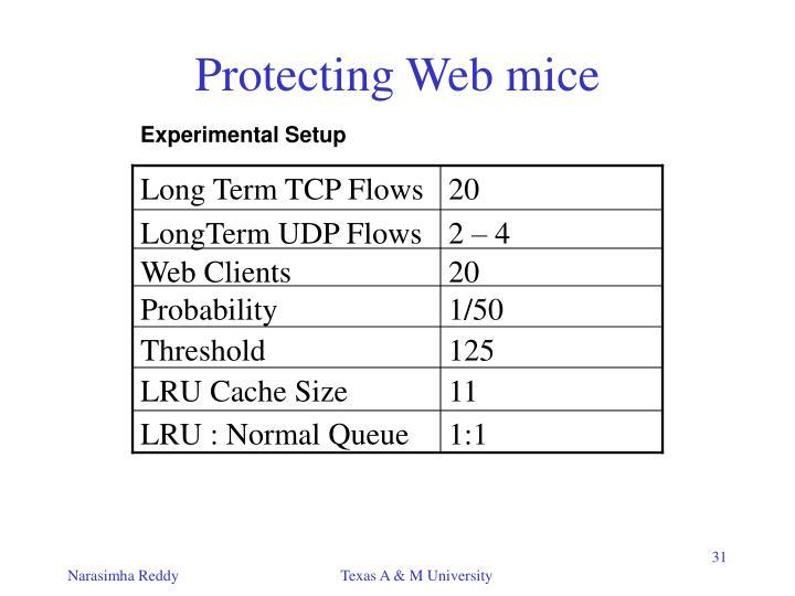 Long Term TCP Flows