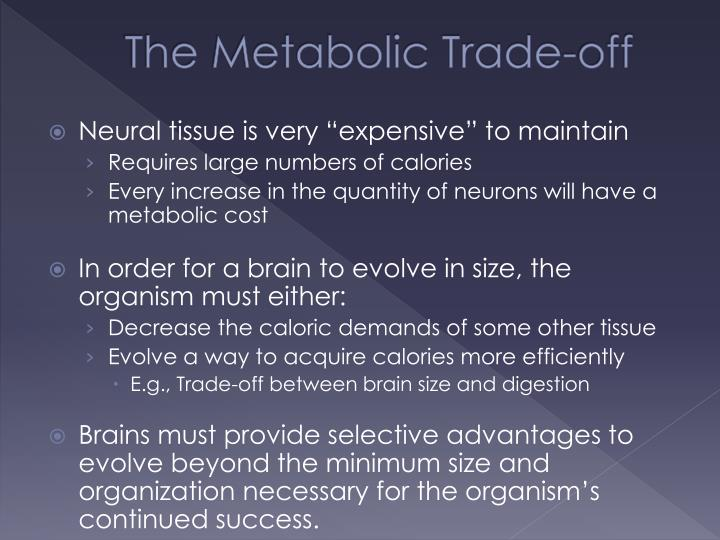 The Metabolic Trade-off