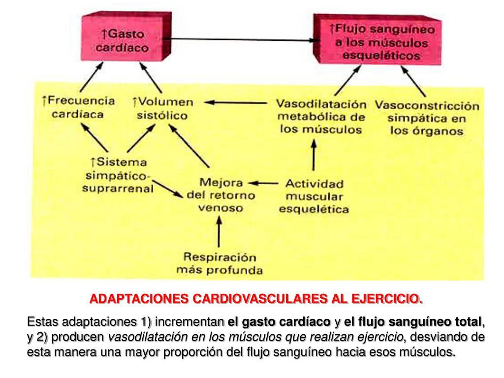 PPT - REGULACION NERVIOSA DE LA CIRCULACIÓN Y CONTROL..