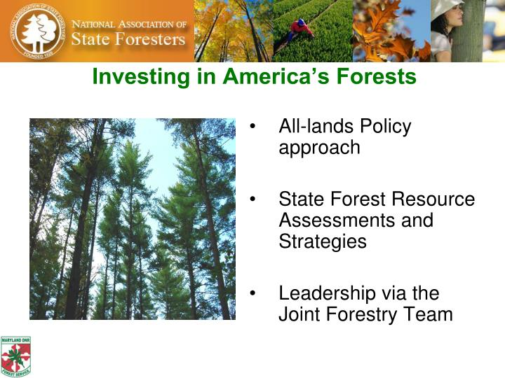 Investing in america s forests