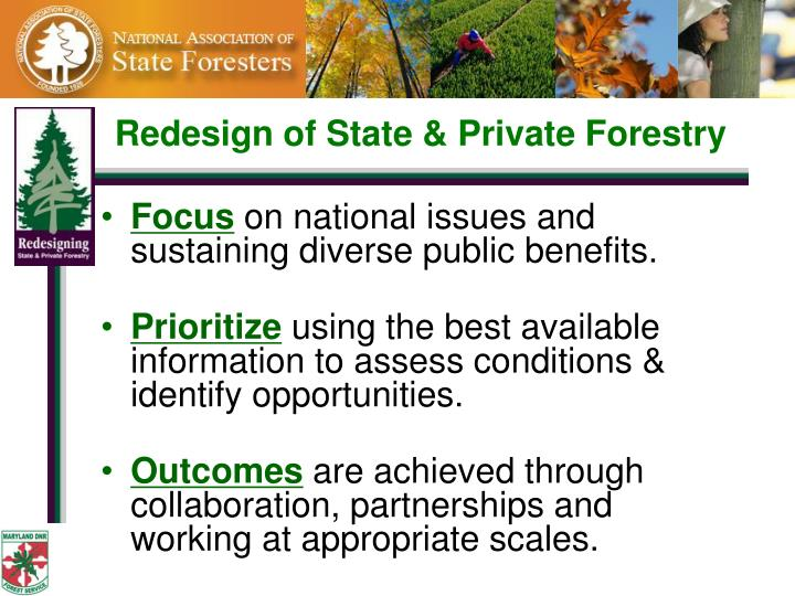 Redesign of State & Private Forestry
