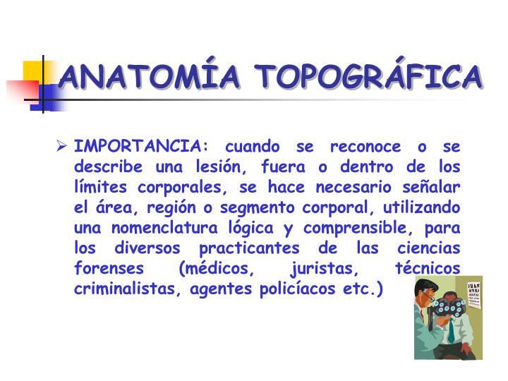 PPT - ANATOMÍA TOPOGRÁFICA FORENSE PowerPoint Presentation - ID:6634263