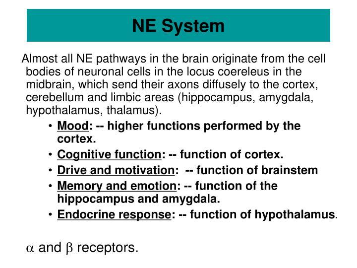 NE System