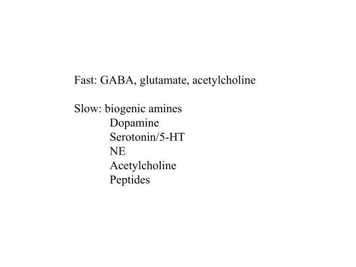 Fast: GABA, glutamate, acetylcholine
