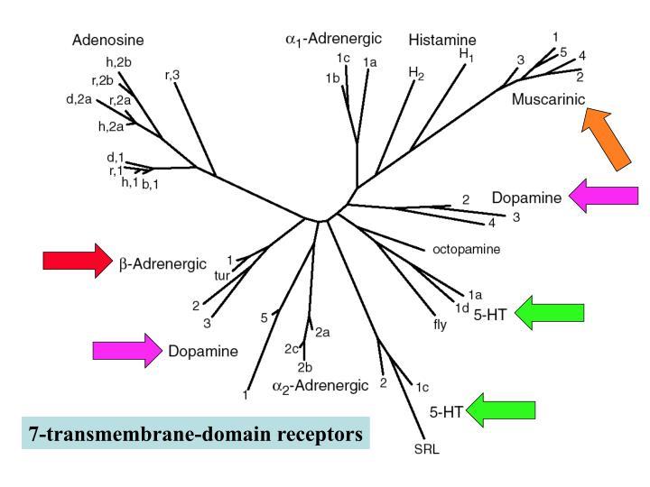 7-transmembrane-domain receptors