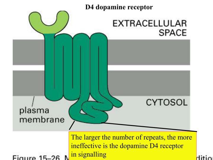 D4 dopamine receptor