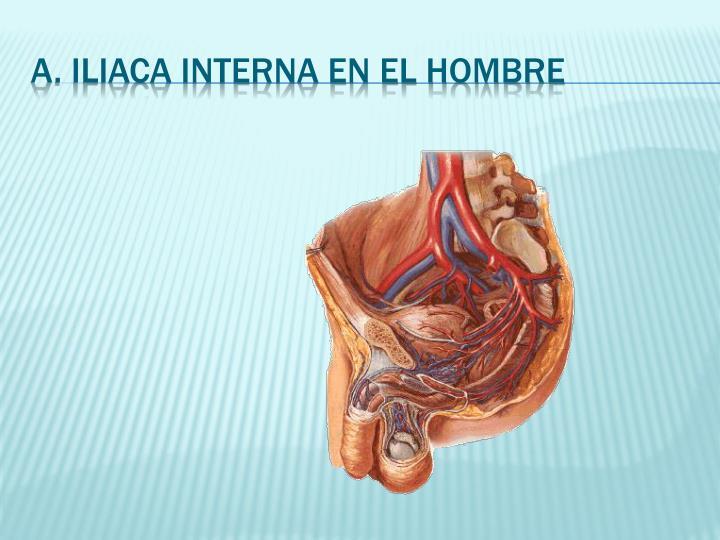 PPT - Sist. Circulatorio: Arterias PowerPoint Presentation - ID:6634586