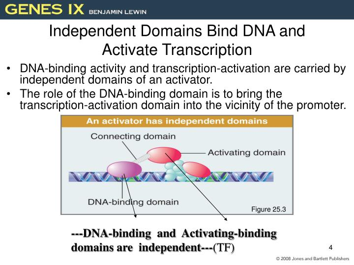 Independent Domains Bind DNA and Activate Transcription
