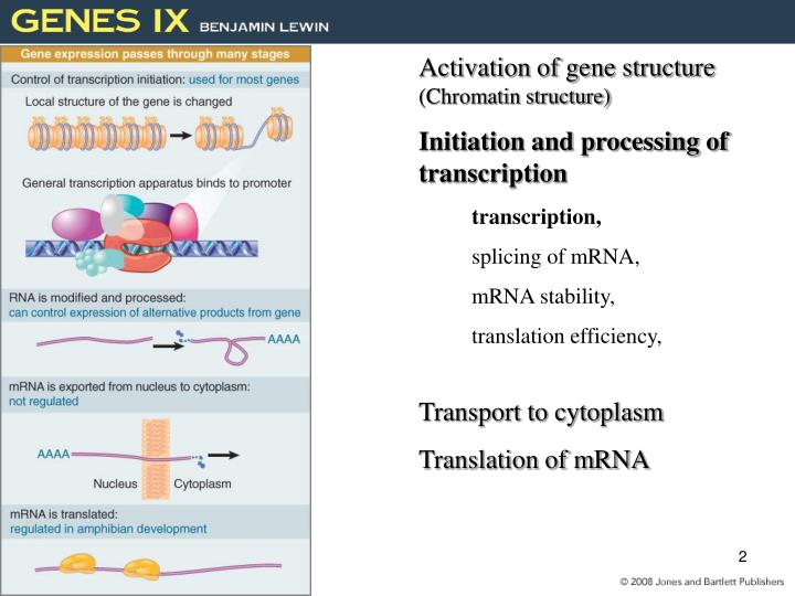 Activation of gene structure