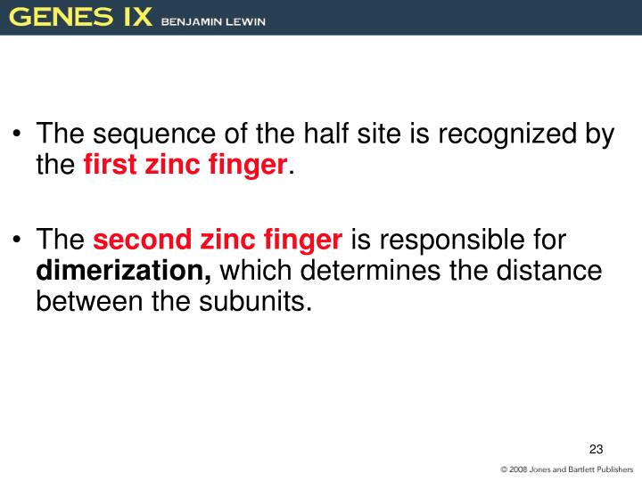 The sequence of the half site is recognized by the