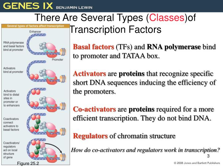 There are several types classes of transcription factors