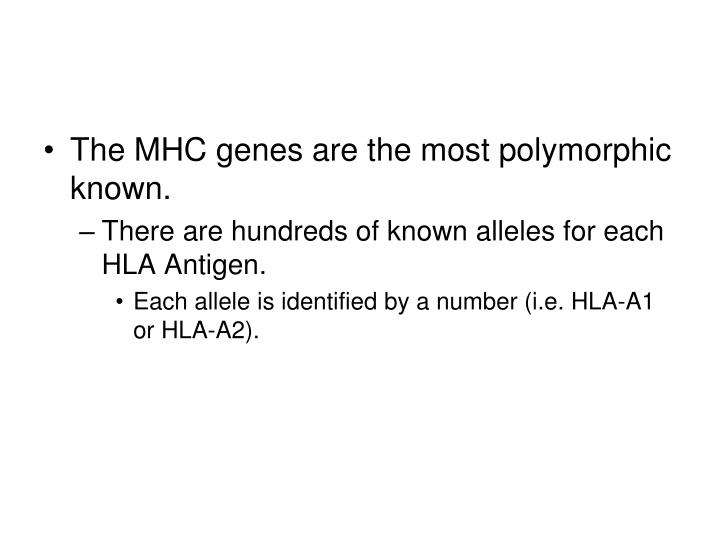 The MHC genes are the most polymorphic known.