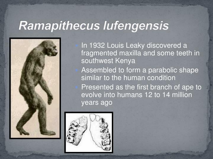 Ramapithecus lufengensis